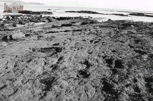 Dinosaur Trackway At Hanover Point Photo Taken By S M Clabby